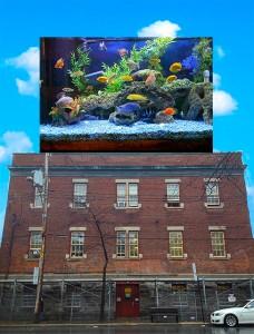 Aquarium au Carrefour